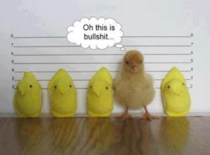 Criminal Defense Humor